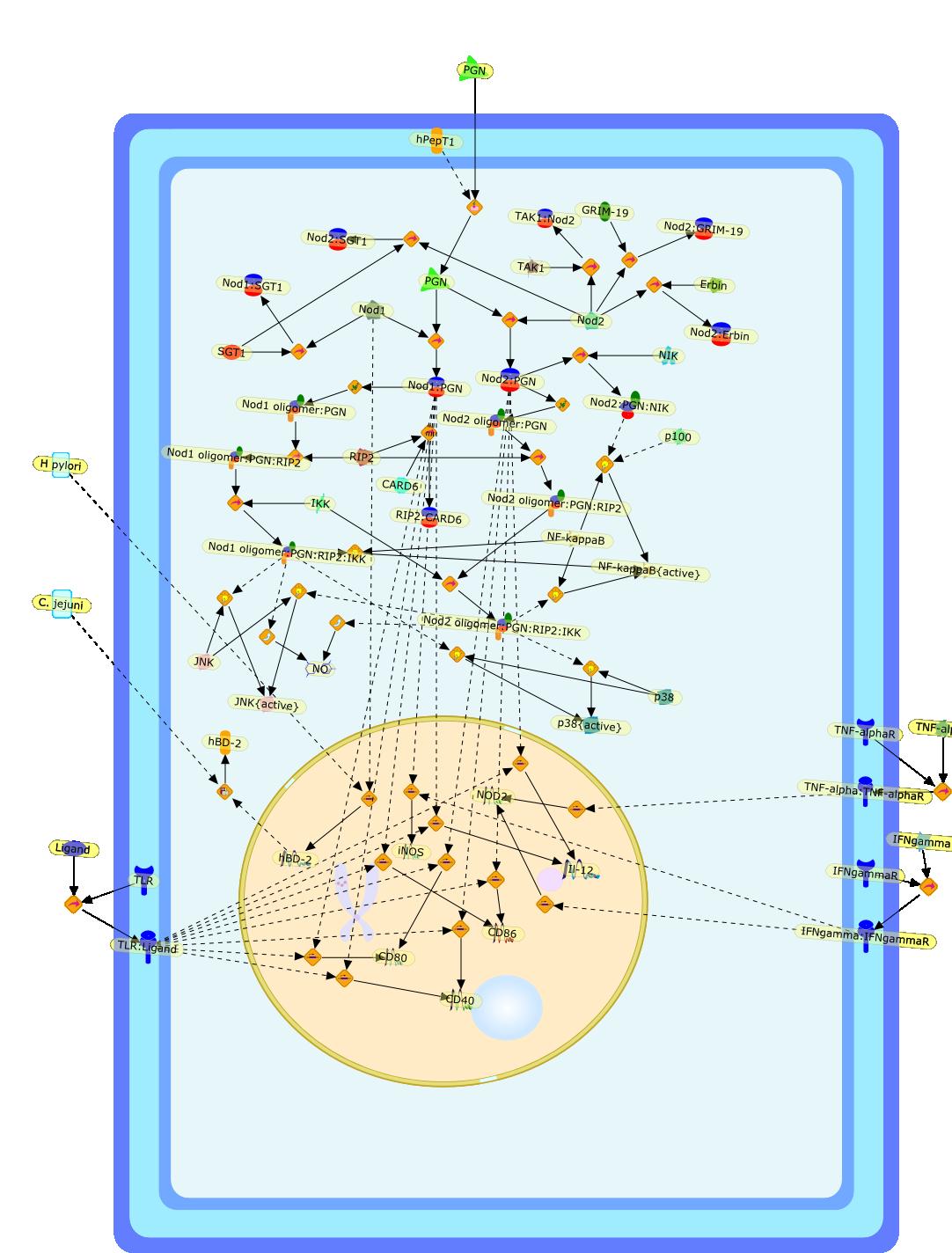 pathway image