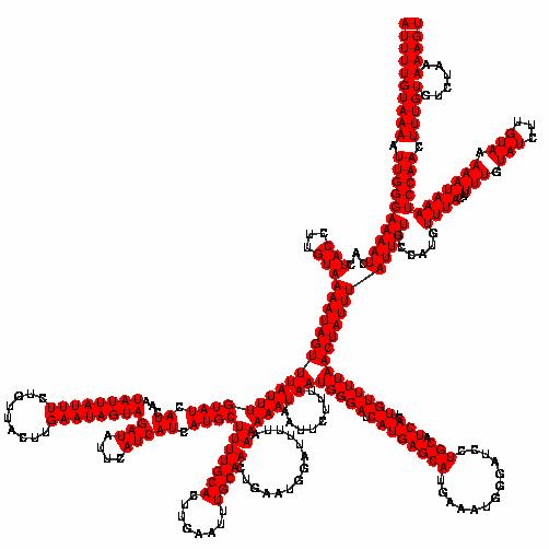 FR116166