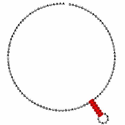 FR205916