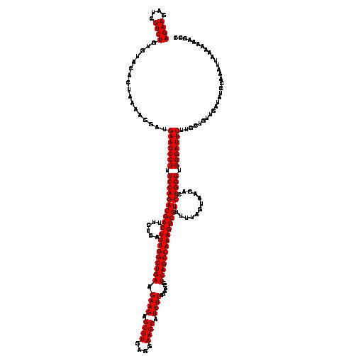 FR221264
