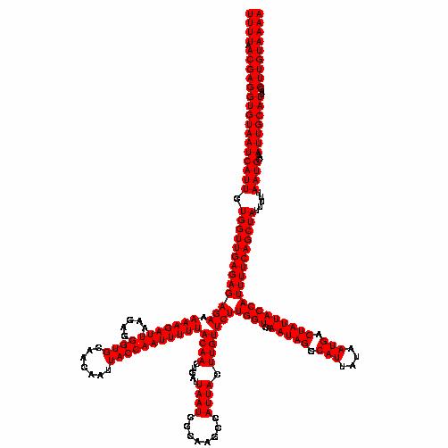 FR267527
