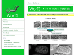 WorTS - Worm TS mutant Database