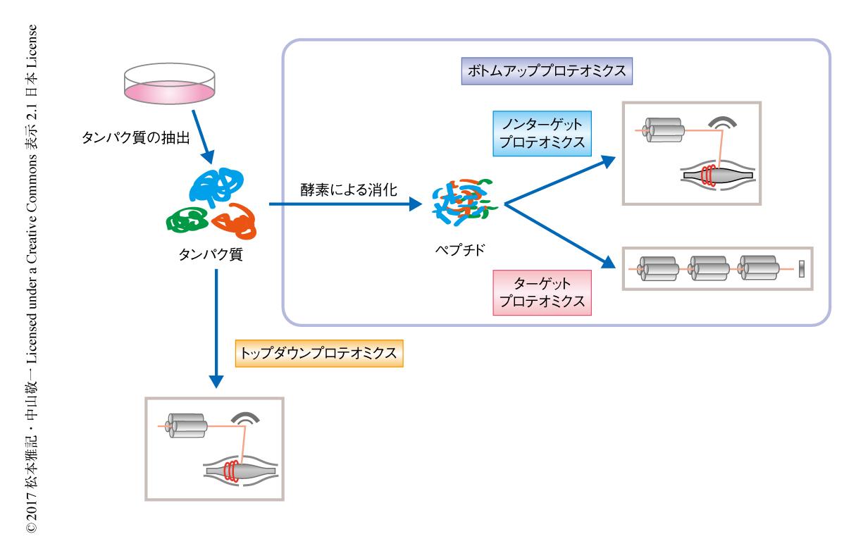 解析 プロテオーム
