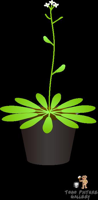 10 самых интересных фактов о цветах и растениях в природе