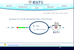 EGTC - Database for the Exchangeable Gene Trap Clones