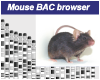 Mouse B6N BAC Clone Database